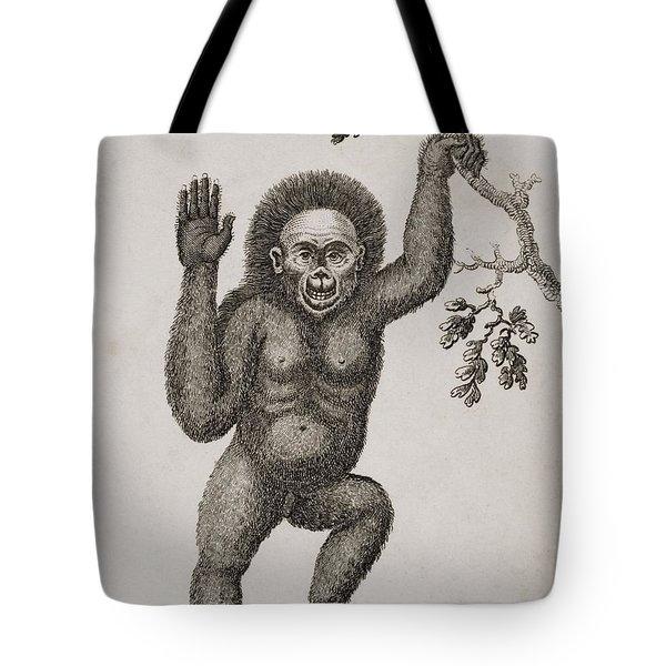 Satyrus, Ourang Outang. Pongo Or Jocko Tote Bag by Ken Welsh