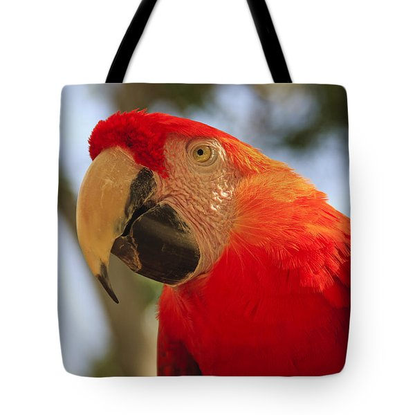Scarlet Macaw Parrot Tote Bag by Adam Romanowicz