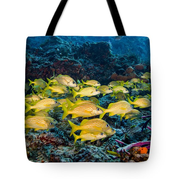 Schooling French Grunts Tote Bag by Mike Raabe