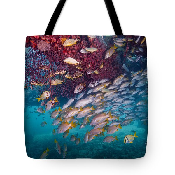 Schools Of Gray Snapper, Yellowtail Tote Bag by Terry Moore