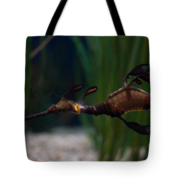 Sea Dragons Tote Bag