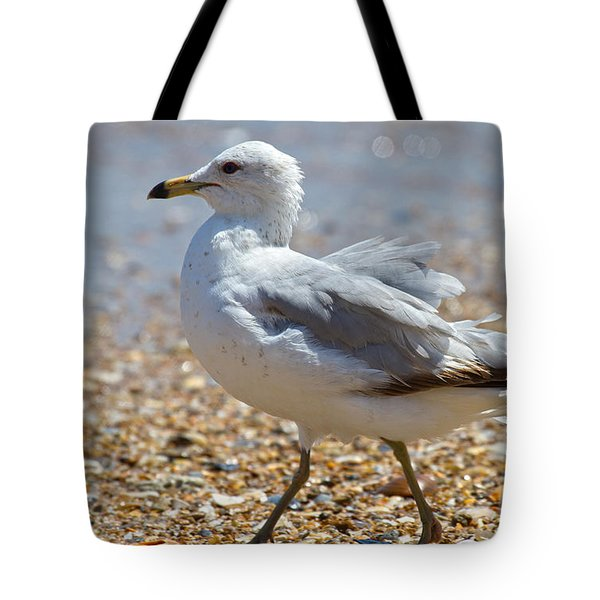 Seagull Tote Bag by Betsy Knapp