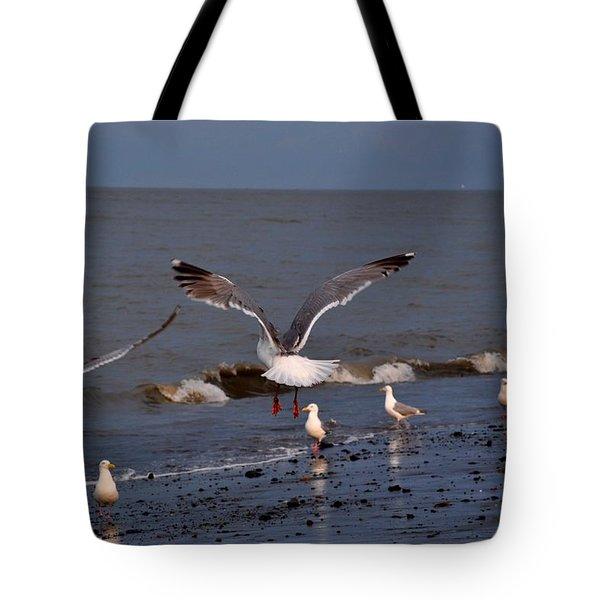 Seagulls Dip Netting  Tote Bag by Debra  Miller