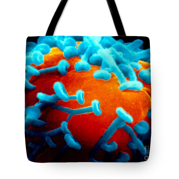 Sem Of Nerve Synapses In Aplysia Tote Bag