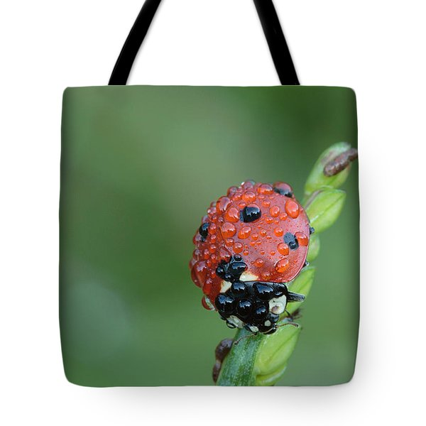 Seven-spotted Lady Beetle On Grass With Dew Tote Bag