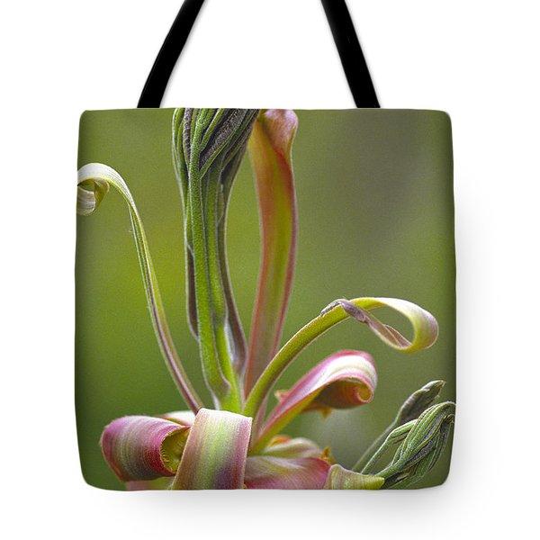 Shagbark Hickory Leaf And Flower Bud Tote Bag