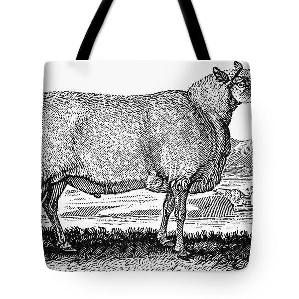 Sheep, C1800 Tote Bag by Granger