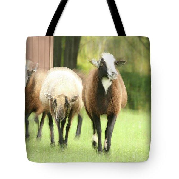 Sheep On The Run Tote Bag by Karol Livote