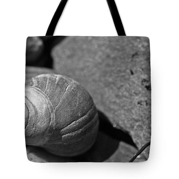 Shells II Tote Bag by David Rucker