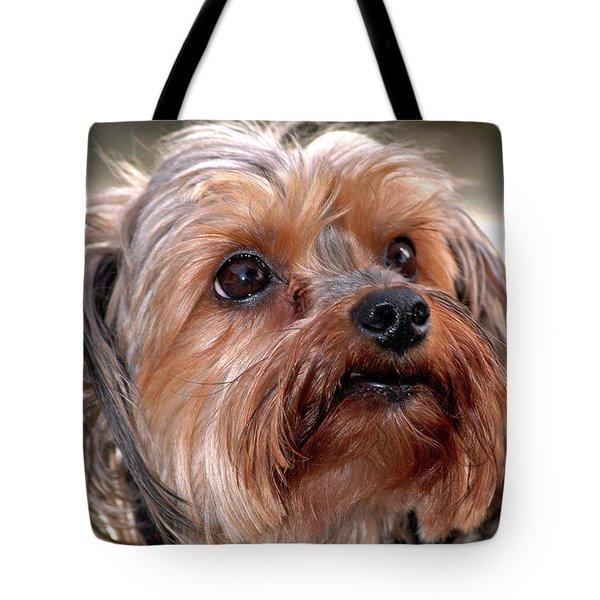 Shih-tzu Tote Bag by Carolyn Marshall