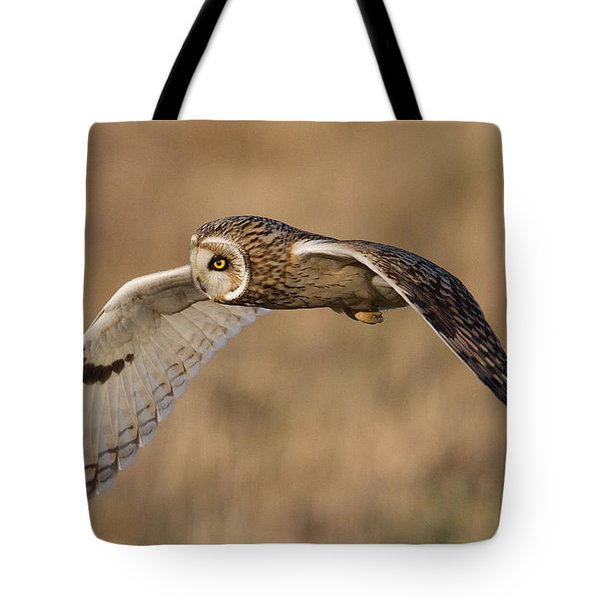 Short-eared Owl In Flight Tote Bag