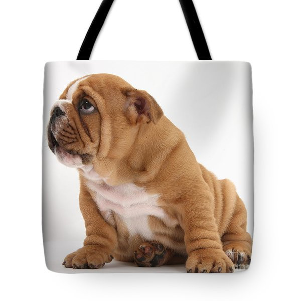 Shy Bulldog Pup Tote Bag by Mark Taylor