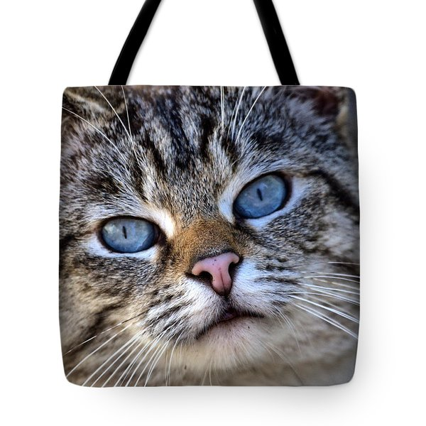 Siamese Feral Cat Tote Bag