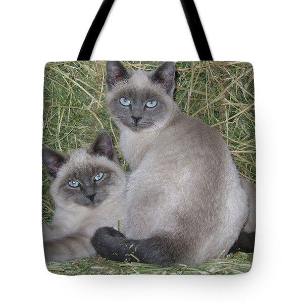 Siamese Haystack Tote Bag