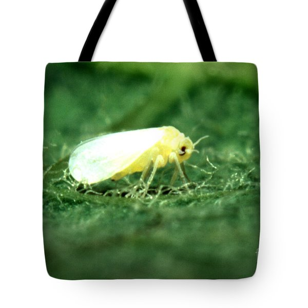 Silverleaf Whitefly Tote Bag by Science Source