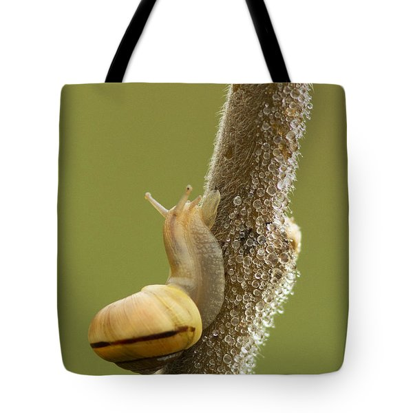 Snail In Dew Tote Bag by Mircea Costina Photography