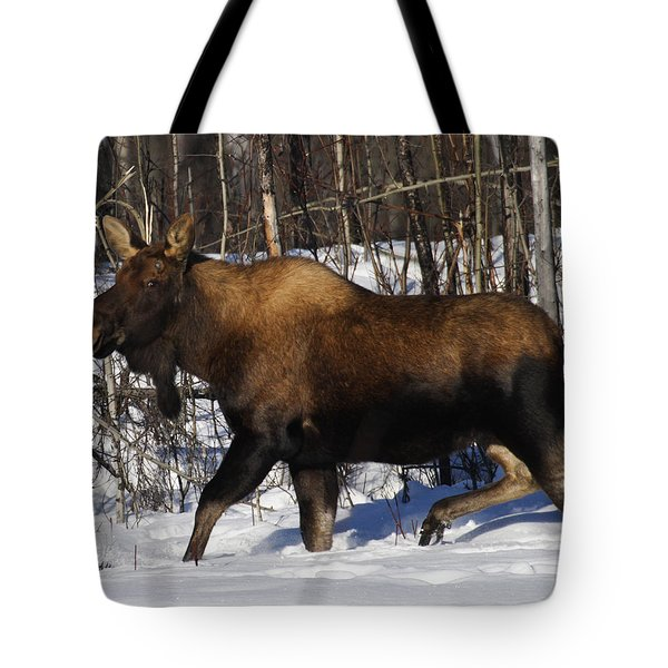 Tote Bag featuring the photograph Snow Moose by Doug Lloyd