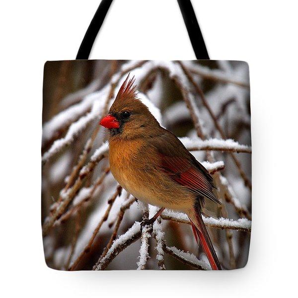 Snowbirds--cardinal Dsb025 Tote Bag
