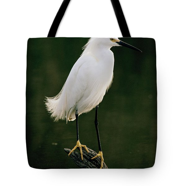 Tote Bag featuring the photograph Snowy Egret Portrait by Doug Herr