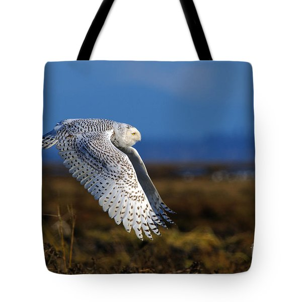Snowy Owl 1b Tote Bag by Sharon Talson