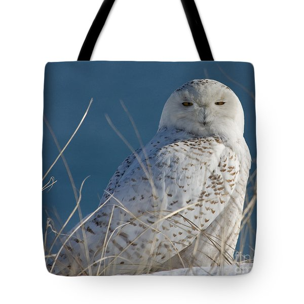 Snowy Owl Profile Tote Bag