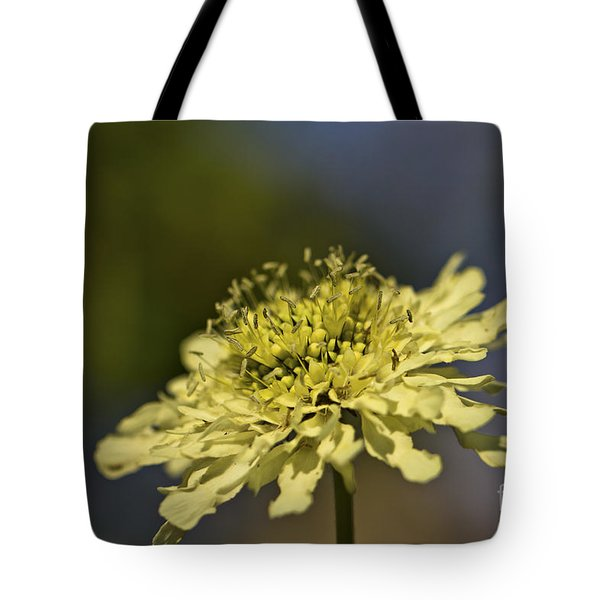 Soft Yellow. Tote Bag by Clare Bambers