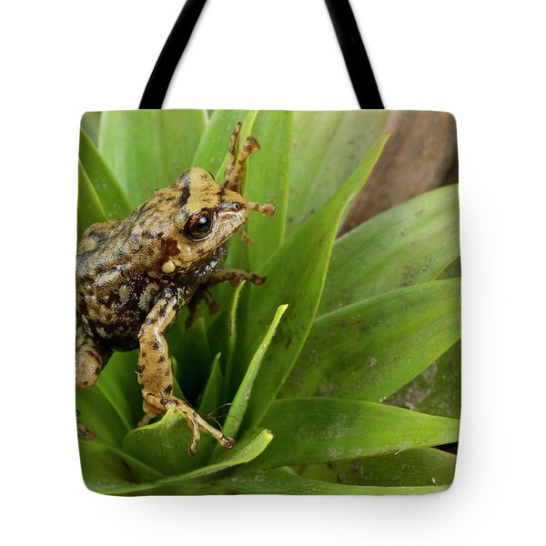 Southern Frog Pristimantis Sp, Newly Tote Bag by Pete Oxford