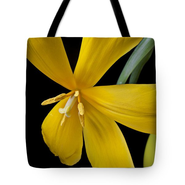 Spent Tulip Tote Bag by Garry Gay