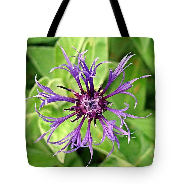 Spider Flower Tote Bag by Nick Kloepping