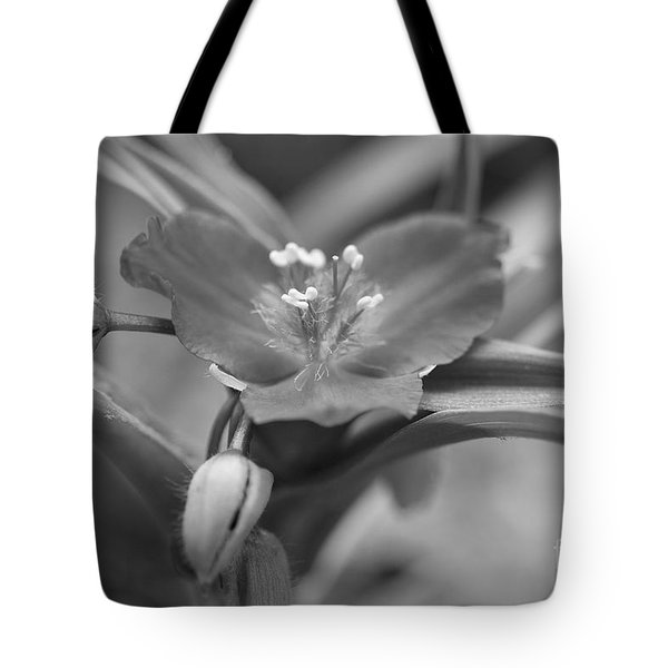 Spiderwort In Black Tote Bag by Brooke Roby