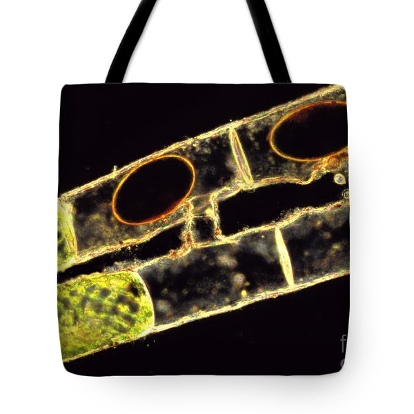 Spirogyra Zygospores Tote Bag by M. I. Walker