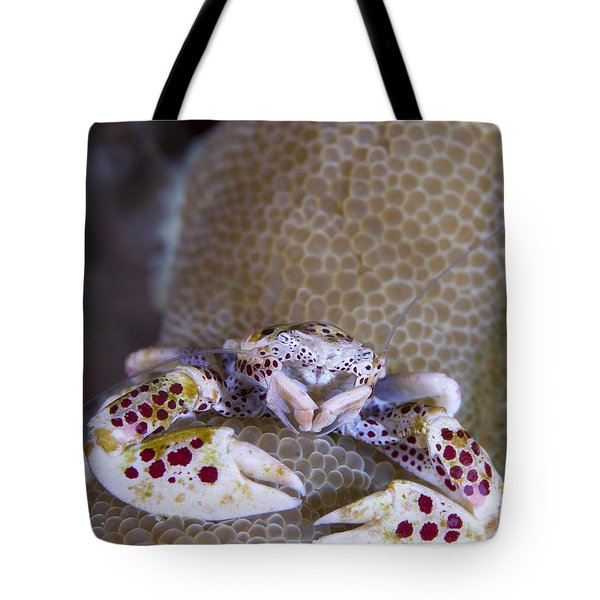 Spotted Porcelain Crab Feeding Tote Bag by Steve Jones