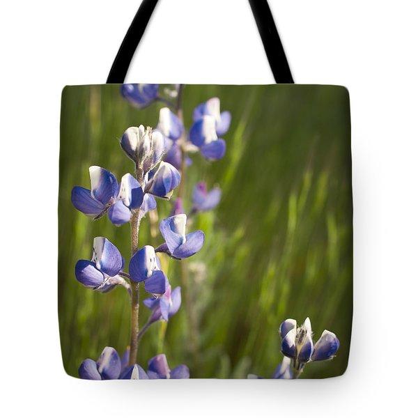 Spring Lupines  Tote Bag by Priya Ghose