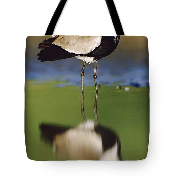 Spur Winged Plover With Its Reflection Tote Bag by Tim Fitzharris