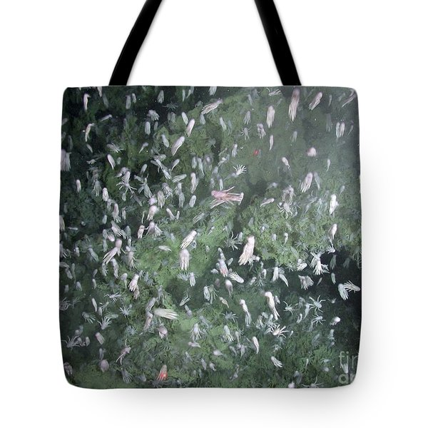 Squat Lobsters At Seamount X Tote Bag