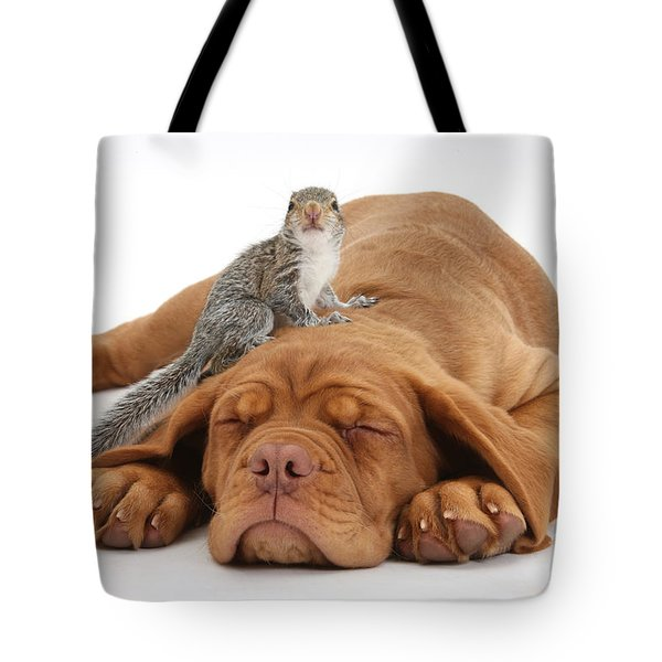 Squirrel And Puppy Tote Bag by Mark Taylor