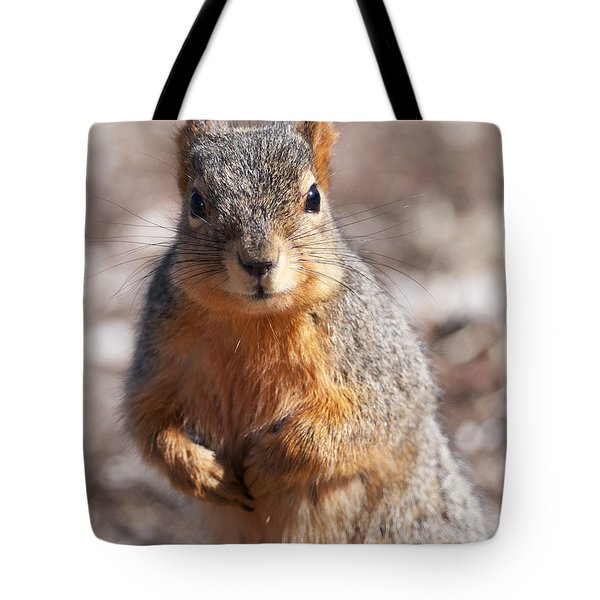 Squirrel Tote Bag by Art Whitton