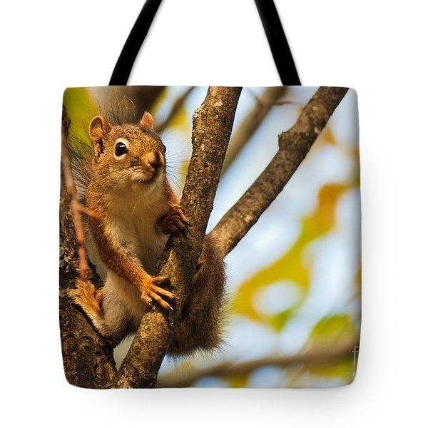 Tote Bag featuring the photograph Squirrel On High by Cheryl Baxter