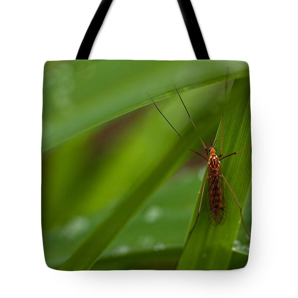 Squito Has Landed Tote Bag by Karol Livote
