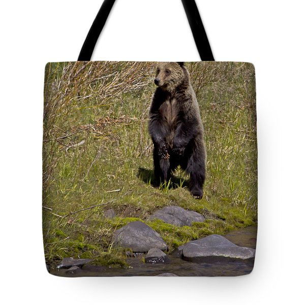 Tote Bag featuring the photograph Standing Grizzly by J L Woody Wooden