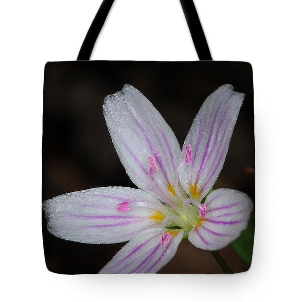 Star Of Bethlehem Tote Bag by Paul Ward