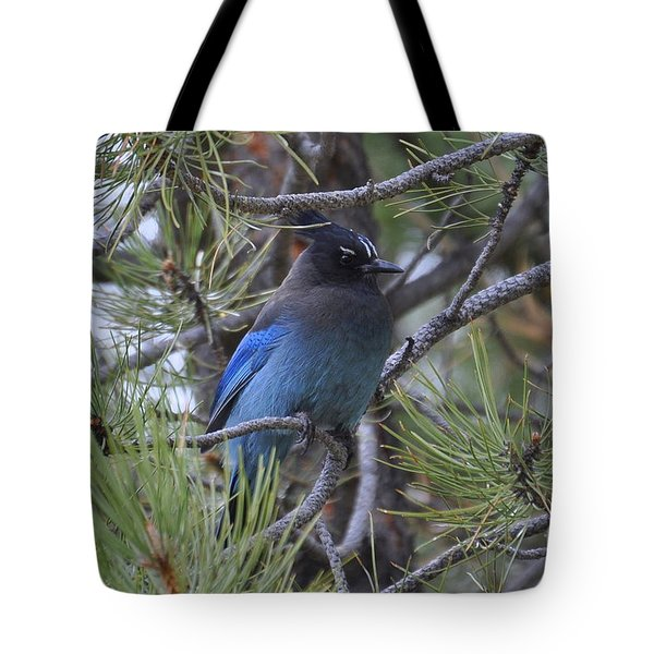 Tote Bag featuring the photograph Stellar's Jay In Profile by Dorrene BrownButterfield