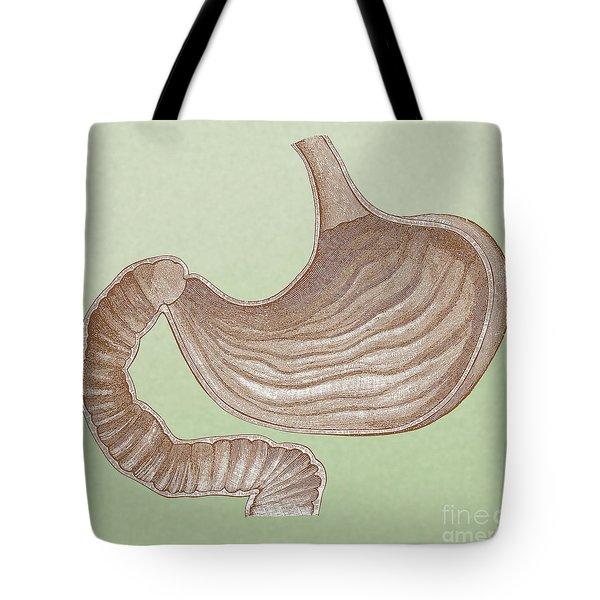 Abdominal Organs Tote Bags | Fine Art America