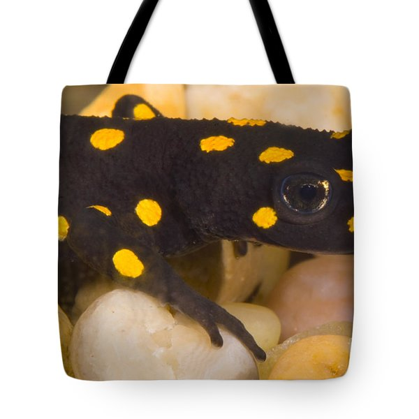 Strauchs Spotted Newt Tote Bag