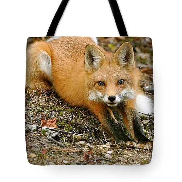 Stretching Fox Tote Bag by Rick Frost