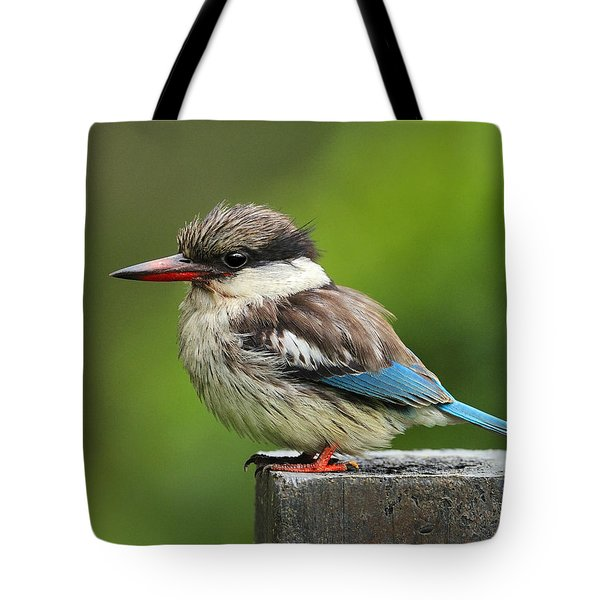 Striped Kingfisher Tote Bag
