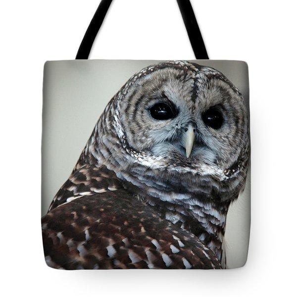 Striped Owl Tote Bag by LeeAnn McLaneGoetz McLaneGoetzStudioLLCcom