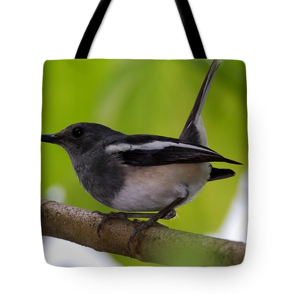 Tote Bag featuring the photograph Study Of A Magpie-robin by Fotosas Photography