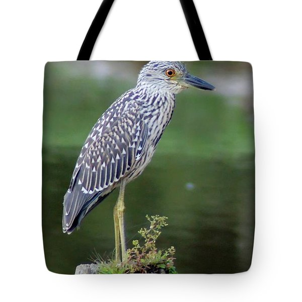 Stumped Night Heron Tote Bag by Benanne Stiens