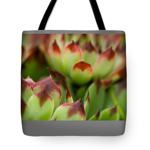Succulent Tote Bag by Trevor Chriss